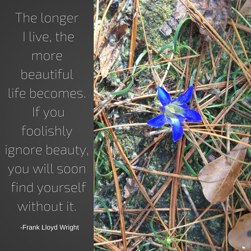 The longer I live, the more beautiful life becomes. If you foolishly ignore beauty, you will find yourself without it.