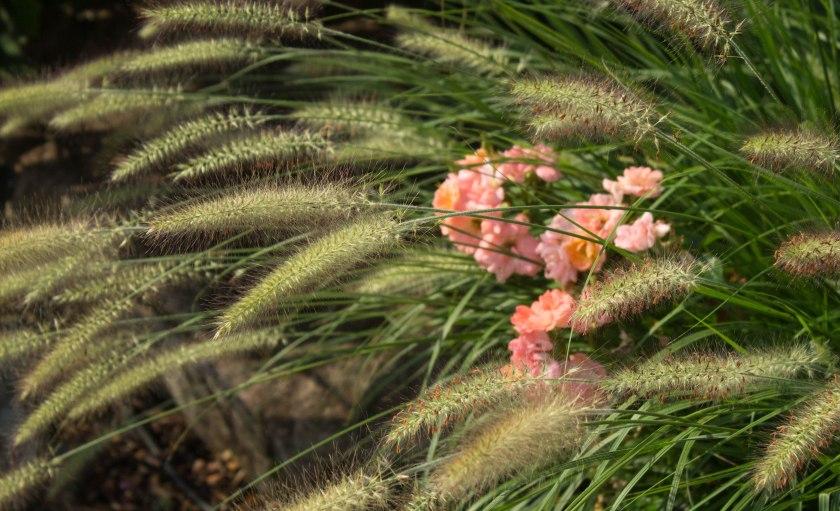 pink-flowers-17lr-2274
